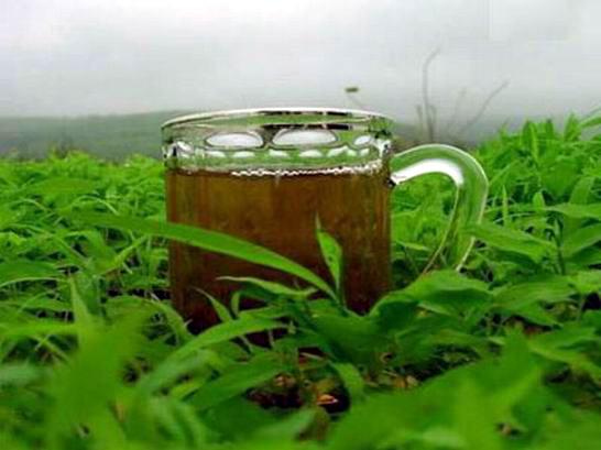 tea-saida