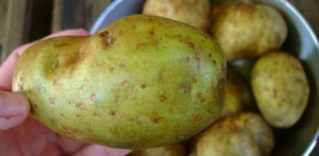 **أحذروا البطاطس الخضراء ask-julie-are-green-